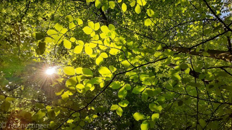 Ritas Kraftquelle Wald